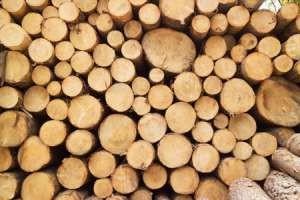 Fiziko-mehanicheskie svoi`stva drevesiny`