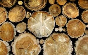 Svezhesrublennaia drevesina